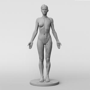 Female and Male Anatomy Figures by 3dtotal review